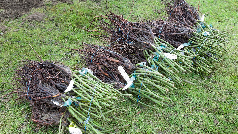 Yleistä puutarhakasveista