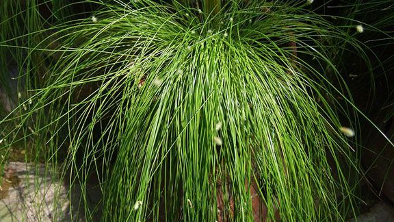 Viherkasvit Sisälle