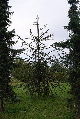 http://puutarha.net/keskustelu/aihekuva.asp?id=412922