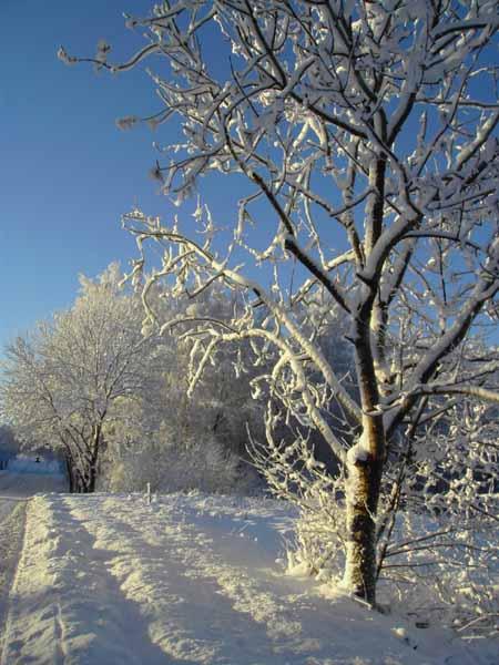 Talvipäivän Tasaus