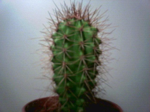 Kaktus Lajit