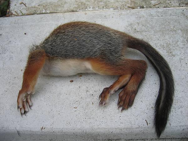 Oravan Kakka