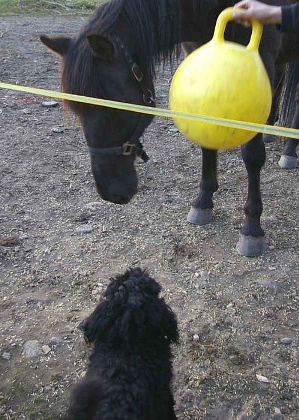 Sitten Shelby tuli haluamaan myös keltaista jumppapalloa 1ab953fb60