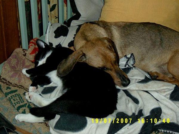 nukkuvat koirat dating läpi käynti