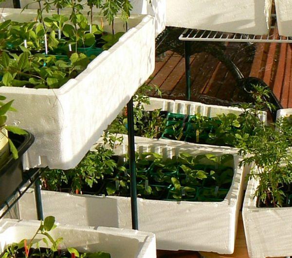 Osaat määrittää hyöty-, rikka- ja luonnonkasveja ja tunnet ravinto- ja koristekasvien käyttöominaisuudet.