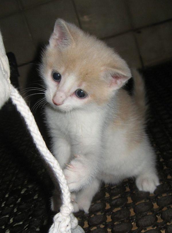 kissan pentu teini suku puoli
