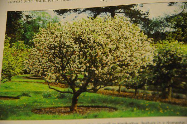Omenapuun Latvan Leikkaus