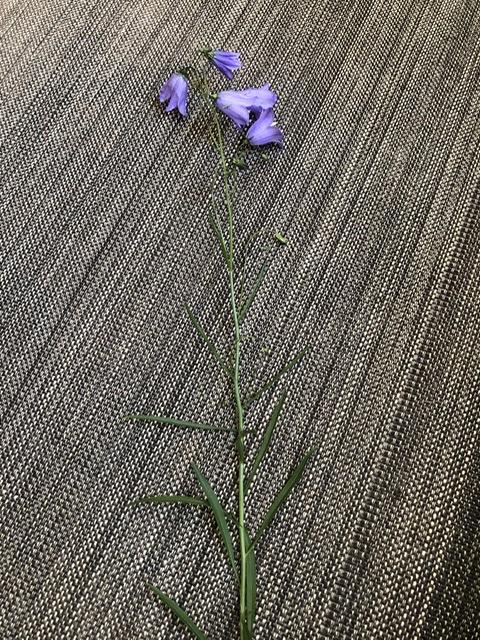 Kasvien Tunnistaminen